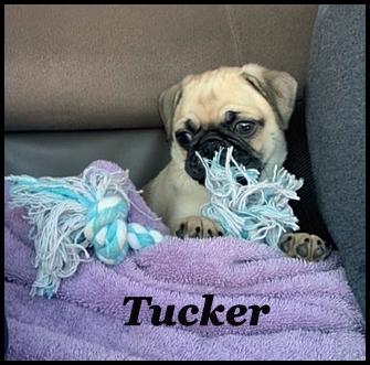 Bai-Lei's Tucker loves car rides!