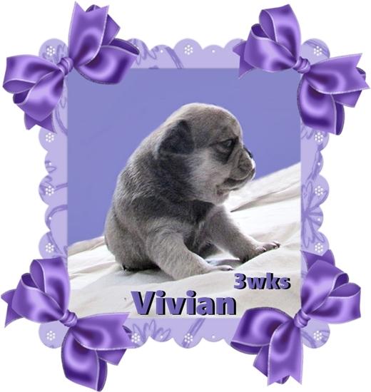 Cocoa's chinchilla Vivian
