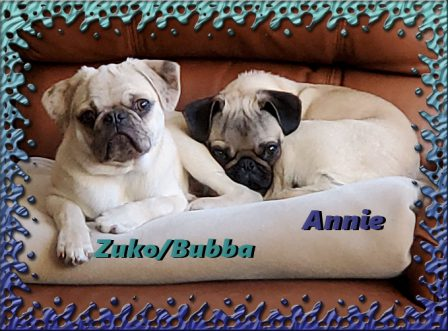 Zuko/Bubba with his friend Annie - Multiple Color Pugs - Puppies and Adults | A dog can't think that much about what he's doing, he just does what feels right.