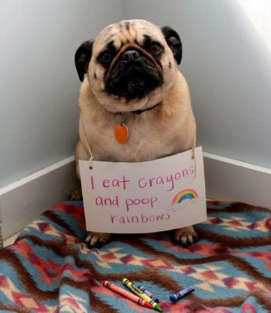 Only Good Things Come Out of Pugs! - Adult Fawn Pug | Dogs love their friends and bite their enemies, quite unlike people, who are incapable of pure love and always mix love and hate.